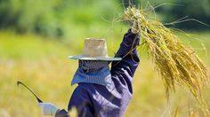 ธ.ก.ส. ออกให้บริการเกษตรกรแจ้งความประสงค์ เข้าโครงการลดภาระหนี้