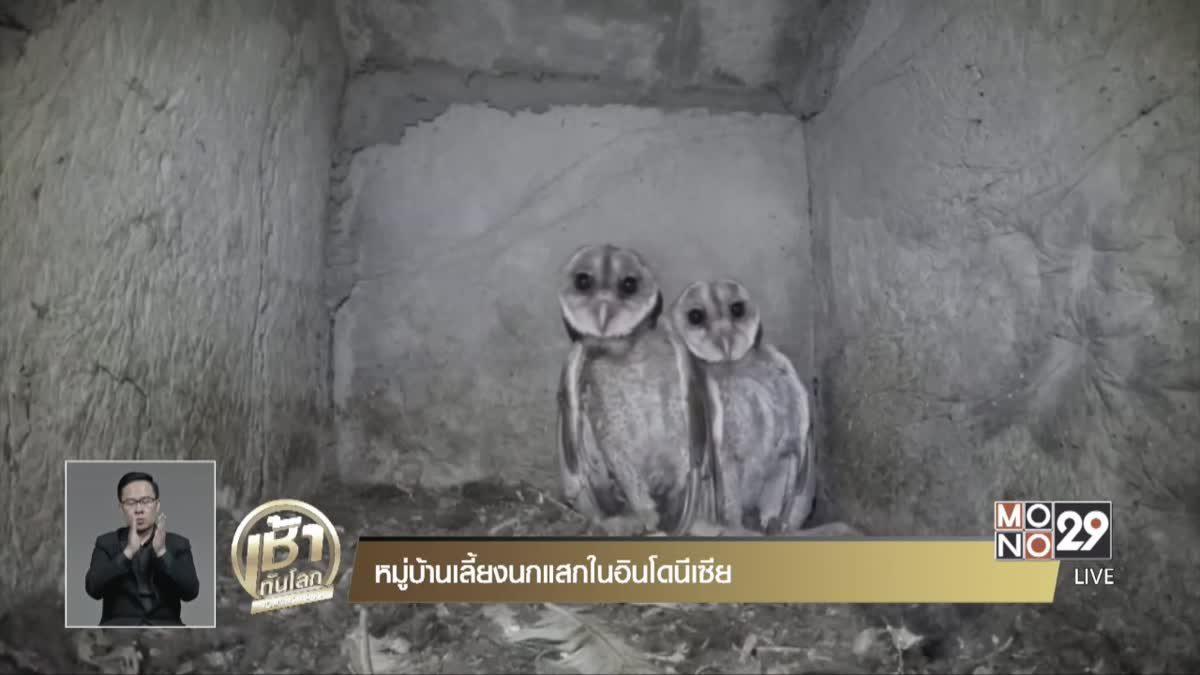 หมู่บ้านเลี้ยงนกแสกในอินโดนีเซีย