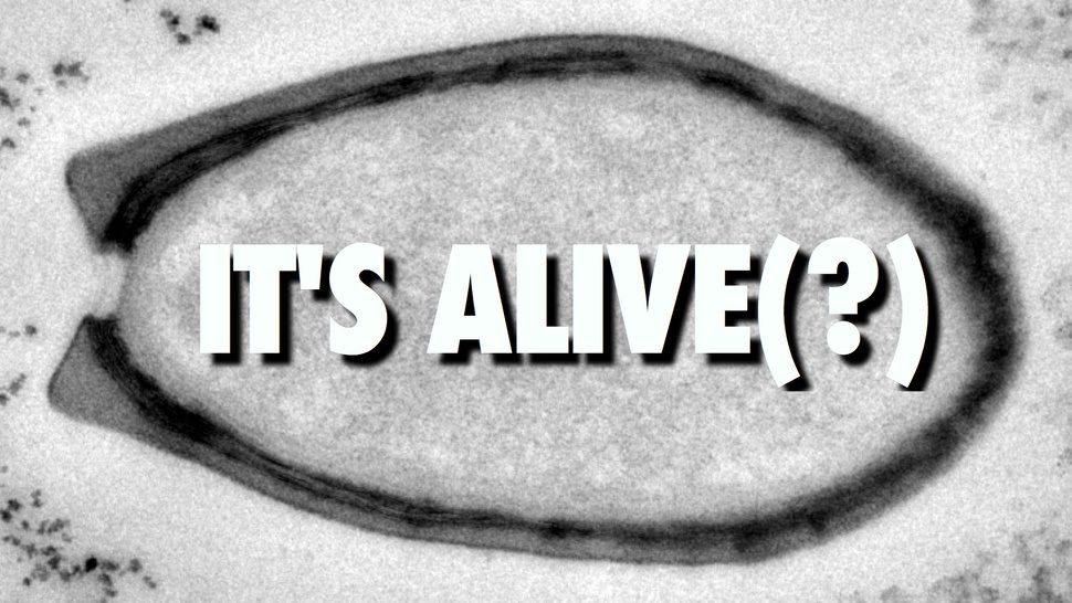 """เอเลี่ยน!!? นักวิทย์ฯ พบ Pandoravirus """"ไวรัสยักษ์"""" คาดมาจากดาวอังคาร!!"""