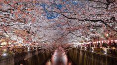 [รีวิว] เที่ยวญี่ปุ่น ลุยเดี่ยว ชมซากุระที่โตเกียว และเกียวโต