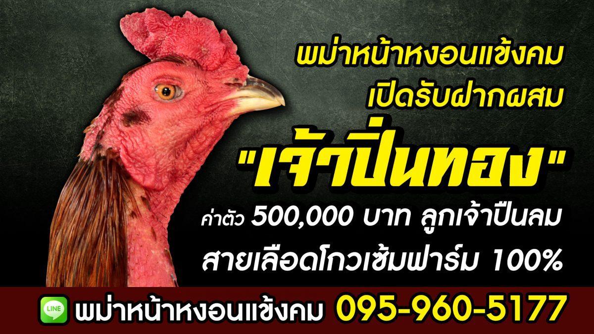 """เปิดฝากผสม """"เจ้าปิ่นทอง"""" ค่าตัว 500,000 บ. พม่าหน้าหงอนแข้งคม จ.สระบุรี เสี่ยทิม 095-960-5177"""