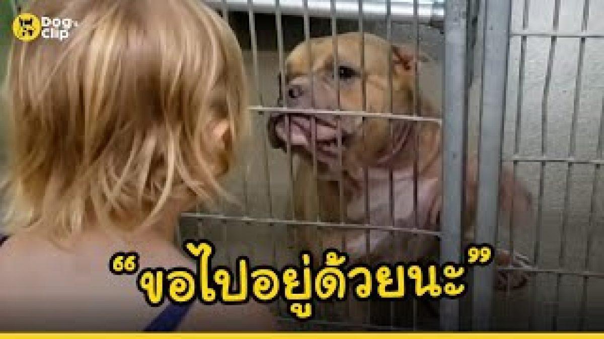 มือเล็กๆของเด็กน้อยมอบชีวิตใหม่ให้น้องหมาป่วย | Dog's Clip