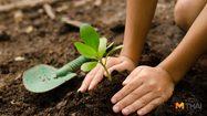10 ต้นไม้ต้องห้าม ไม่ควรปลูกไว้ในบ้าน