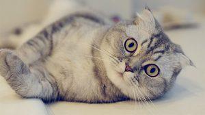 10 พันธุ์แมวที่สวยที่สุดในโลก