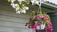 4 เทคนิคง่ายๆ เพิ่มความสดชื่นให้บ้านด้วยการจัด สวนแขวน