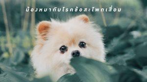 น้องหมาสายพันธุ์ไหนบ้าง ที่พบปัญหา โรคข้อสะโพกเสื่อม