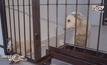 ผู้นำเชเชน เข้าร่วมการเปิดศูนย์พักพิงสัตว์