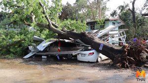 พายุถล่ม! ต้นไม้โค่นทับรถปลัดอำเภอเสียหายหลายคัน