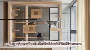บ้านแมวติดผนัง สไตล์โมเดิร์น เก๋ได้ด้วยไม้และกระจก สวยราวกับโชว์รูม