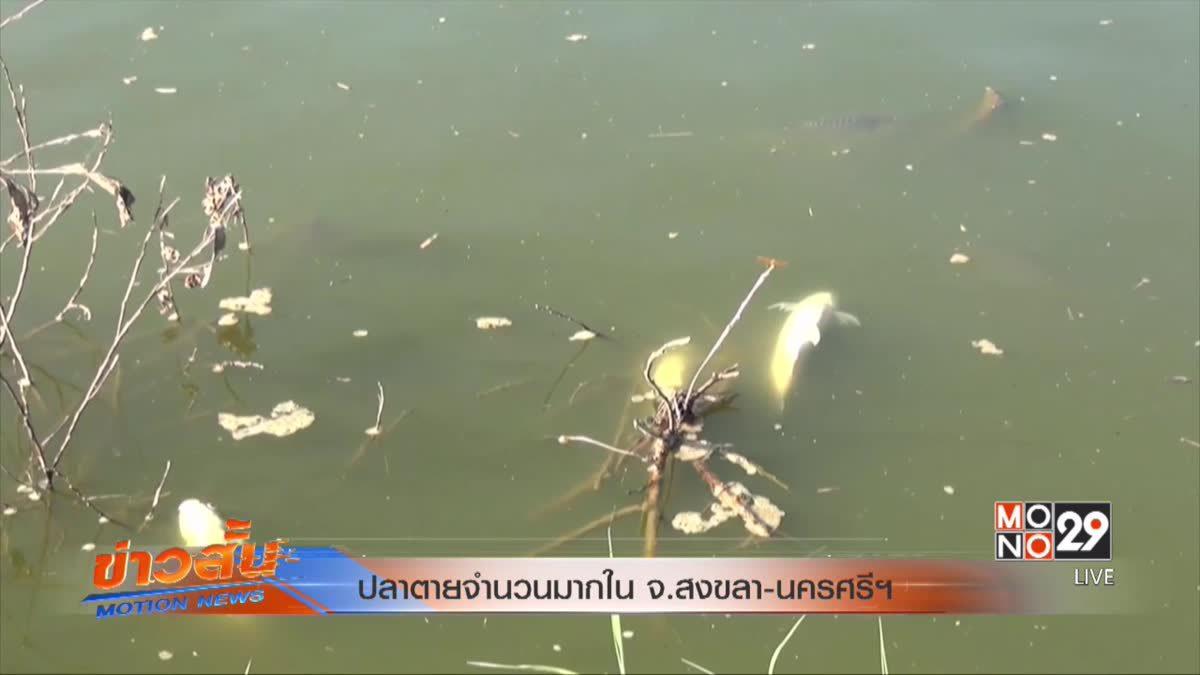 ปลาตายจำนวนมากในจ.สงขลา -นครศรีฯ