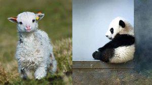 เอ็นดูแรง! 27 ภาพความน่ารักของ สัตว์แรกเกิด ตอนตัวเล็กๆ