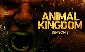 Animal kingdom S3 แอนิมอล คิงดอม ปี 3
