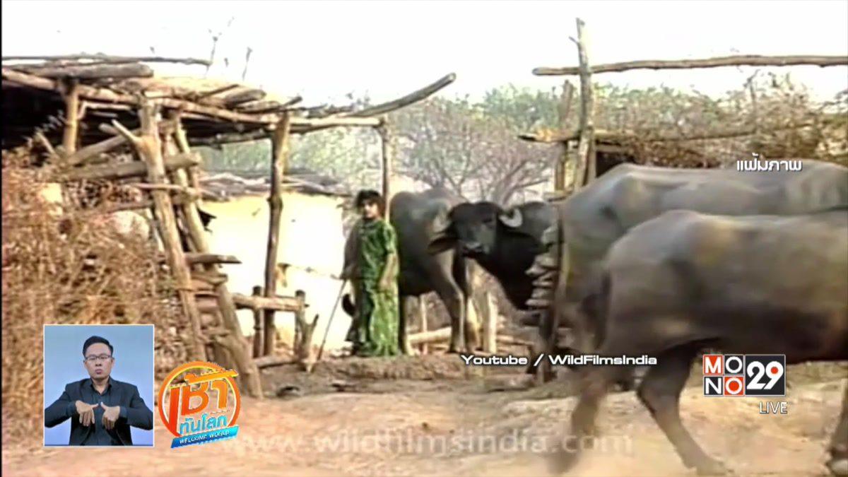 อินเดียจัดระเบียบโรงฆ่าสัตว์