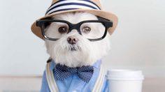 อร๊าย! น่ารักมาก สุนัขโทบี้ กับการถ่ายภาพสไตล์ฮิปสเตอร์