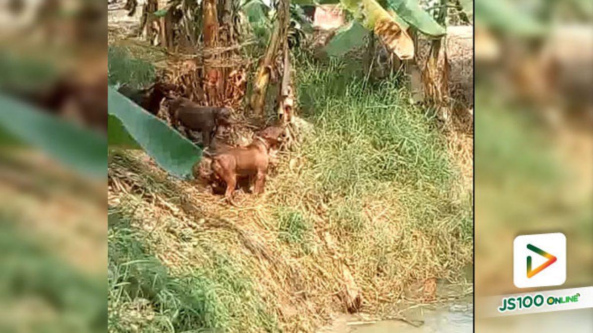 คลิปน้องหมากระโดเล่นน้ำอย่างสนุกสนาน (16-07-61)