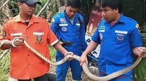 หนุ่มนั่งปลดทุกข์เจอ 'งูสิงห์ดง' โผล่ในชักโครก วิ่งป่าราบ!