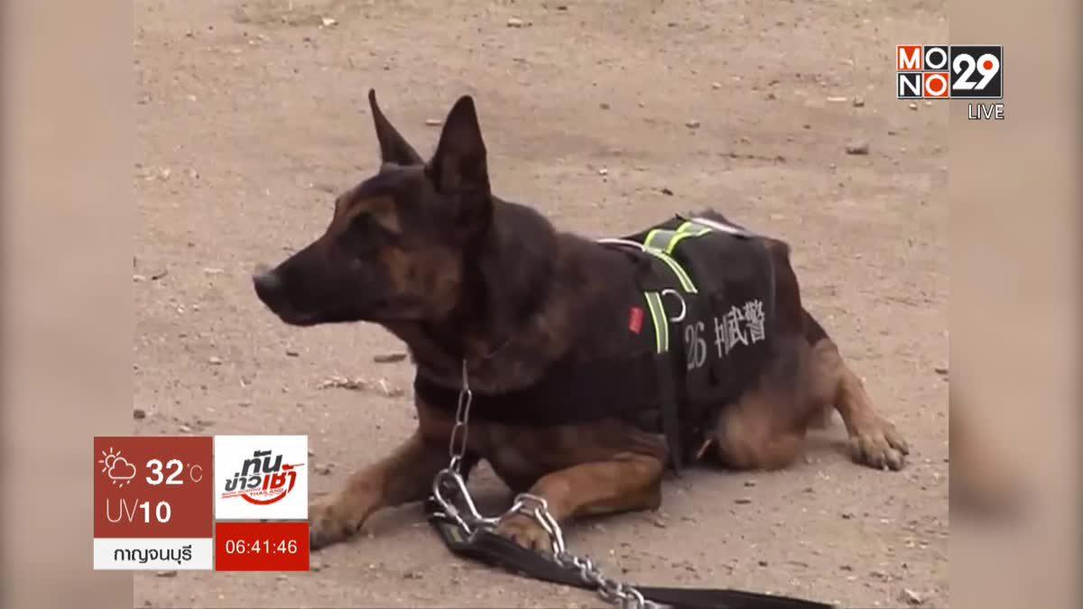 การแข่งขันสุนัขทหารในจีน