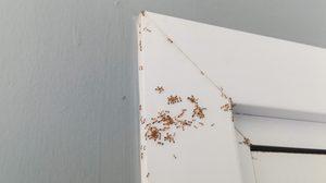 วิธีใช้น้ำส้มสายชู ไล่มดออกจากบ้าน แบบถูกต้องและได้ผลจริง ต้องทำแบบนี้