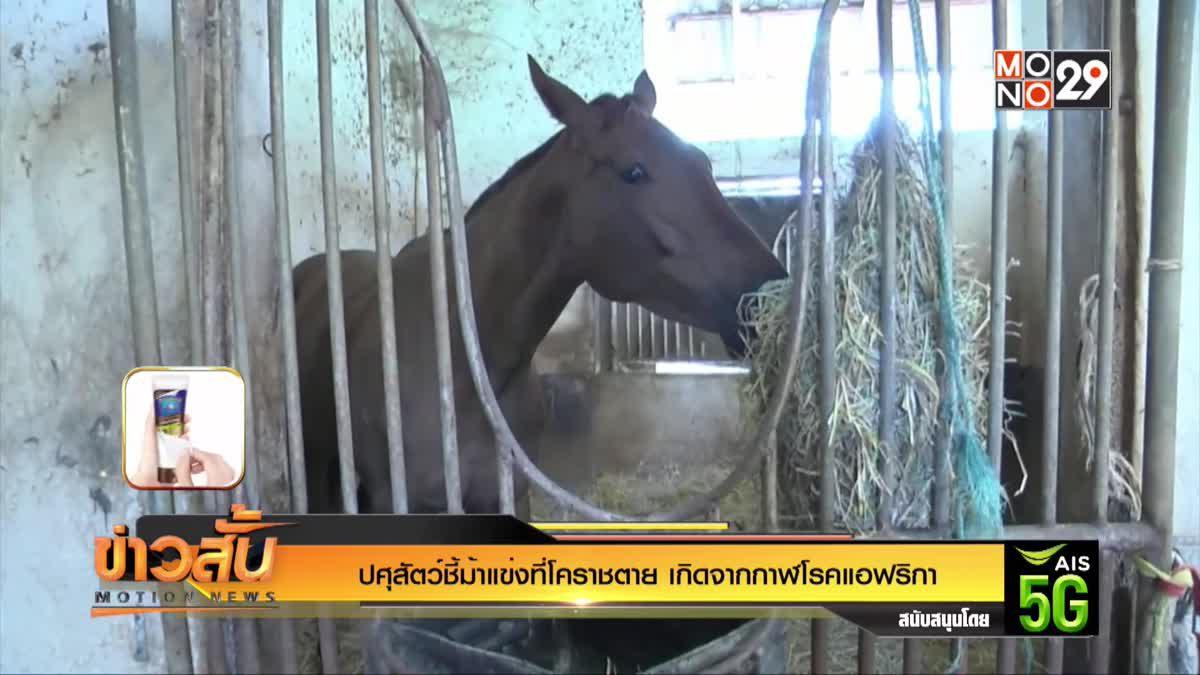 ปศุสัตว์ชี้ม้าแข่งที่โคราชตาย เกิดจากกาฬโรคแอฟริกา