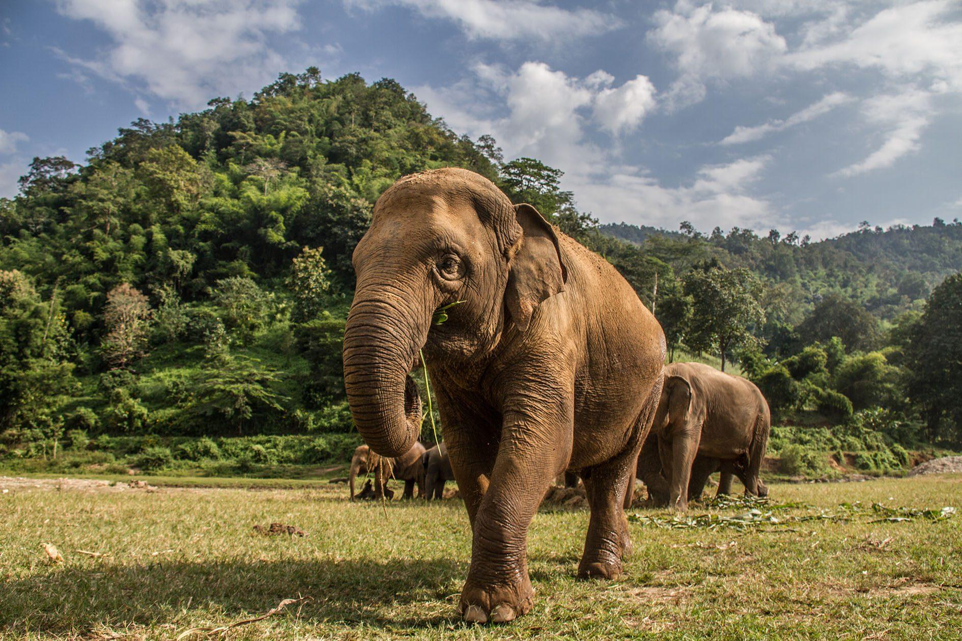 วิกฤตช้างไทย เหตุนักท่องเที่ยวหาย  ช้างนับพันชีวิตต้องต่อสู้กับความหิวโหย หลังโครงการช้างหลายสิบแห่งปิดตัวเพราะสูญรายได้
