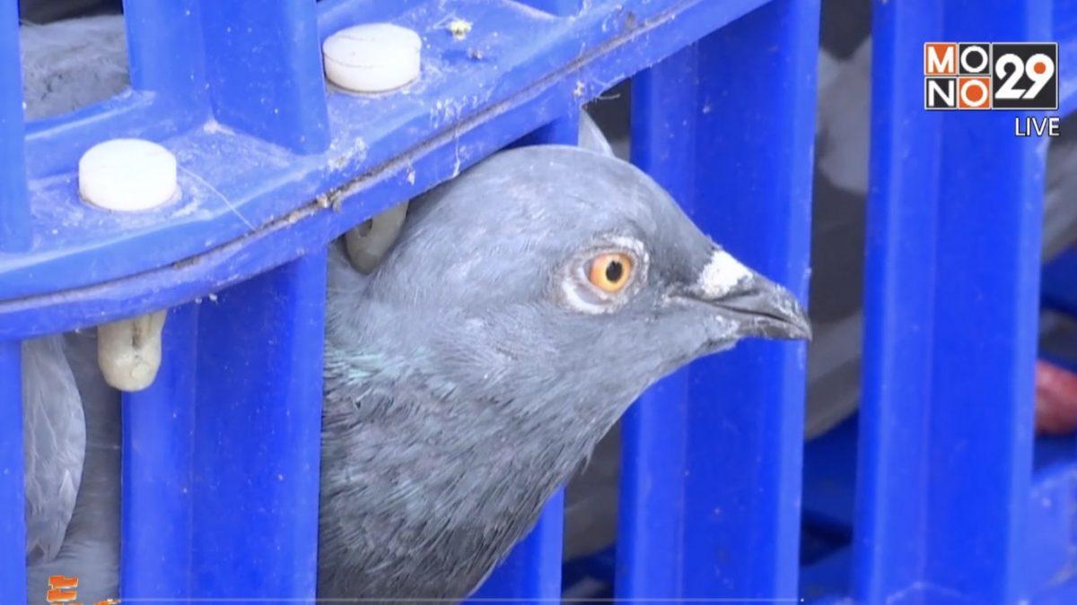 กทม.ลุยจัดระเบียบห้ามให้อาหารนกพิราบ