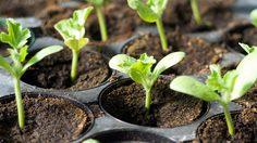 4 เคล็ดลับง่ายๆรู้ไว้ก่อนลงมือ ปลูกผักสวนครัว ที่บ้าน