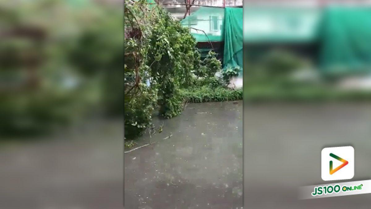 คลิปต้นไม้ใหญ่ล้มขวางถนนในซอยสุขุมวิท 53 ยังไม่สามารถสัญจรผ่านได้ (18-10-61)