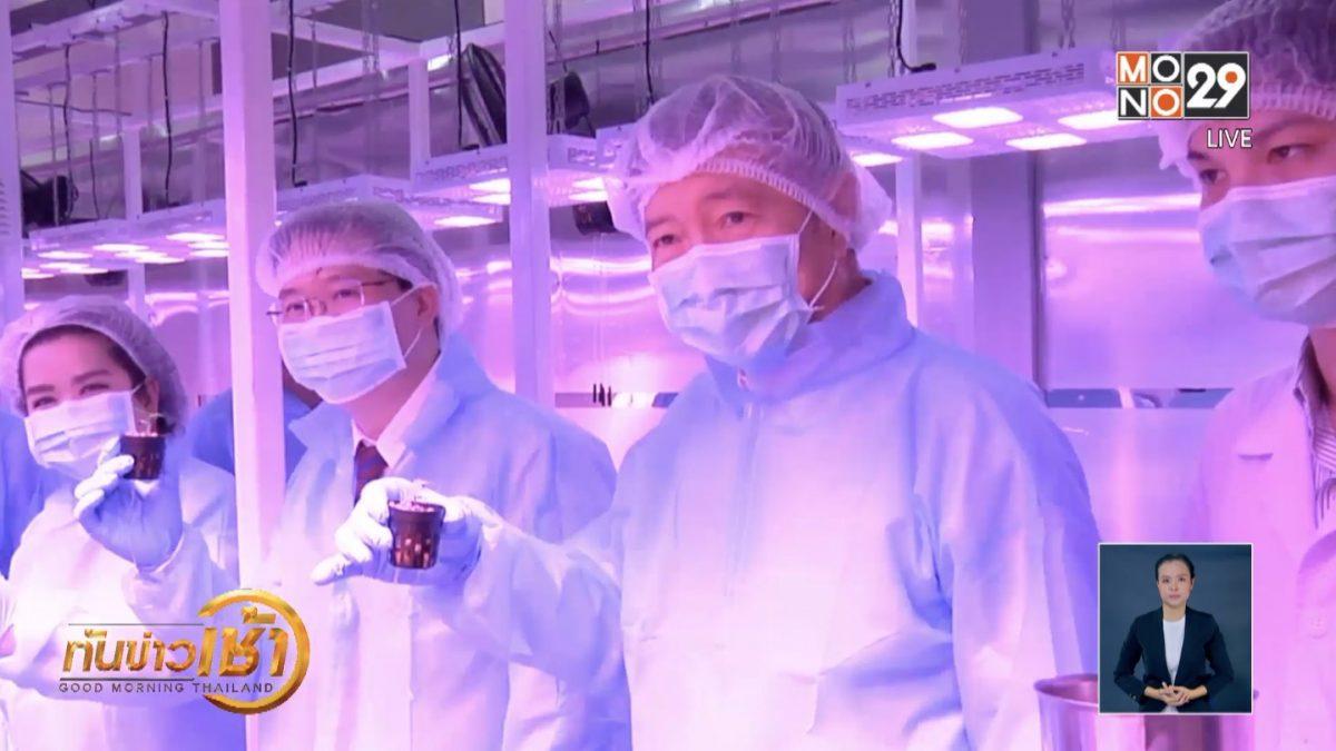 เปิดศูนย์เพาะกัญชาทางการแพทย์แห่งแรกในอาเซียน