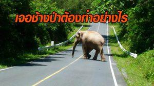 กรมอุทยานแห่งชาติแนะ ข้อควรปฏิบัติเมื่อพบช้างป่า
