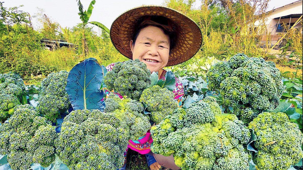 วิธีปลูกบร็อคโคลี่ ง่ายๆ ได้กินแน่นอน / How to grow broccoli, it's very easy. / 如何种植西兰花,这很容易。