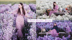 ที่เที่ยวเชียงใหม่ I love flower Farm