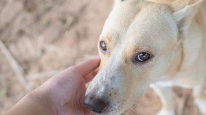 ข้อควรรู้!! วิธีสังเกตสัตว์ที่เป็น โรคพิษสุนัขบ้า จะมีอาการแบบนี้