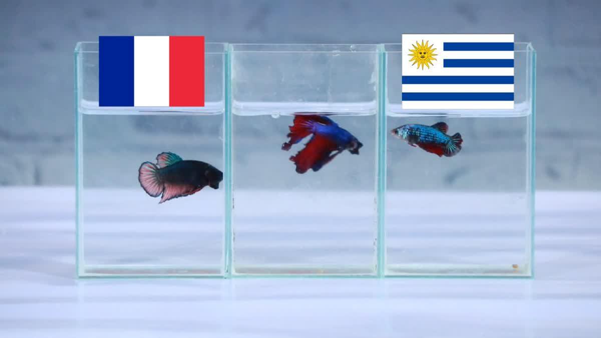 ซี้ซั้วเอามาเล่า ฟันธงฟุตบอลโลก 2018 รอบ 8 ทีม วันแรก