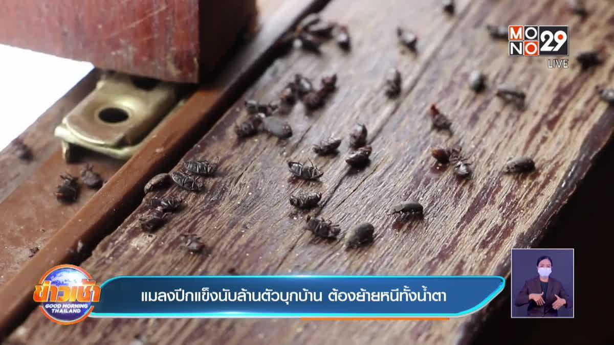 แมลงปีกแข็งนับล้านตัวบุกบ้าน ต้องย้ายหนีทั้งน้ำตา