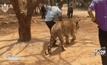 ได้ข้อยุติไม่ยึดคืนเสือจากวัดหลวงตามหาบัว