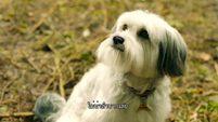 ซีรี่ส์เกาหลี Pudsey the Dog  [ พัดซี่ ยอดสุนัขแสนรู้ ] Part 4
