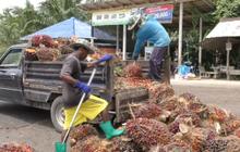ราคาสินค้าเกษตรกระทบเศรษฐกิจกลุ่มอันดามัน