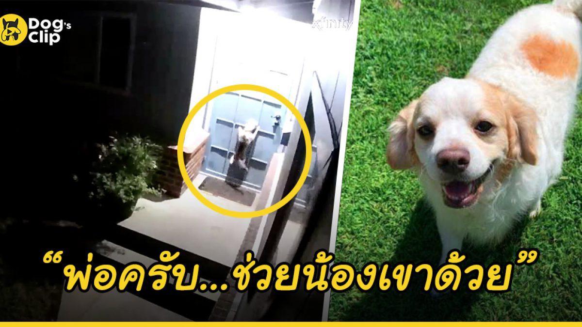 น้องหมาร้องปลุกเจ้านายกลางดึก เพื่อให้ช่วยใครบางคนที่กำลังต้องการความช่วยเหลืออยู่ที่หน้าประตูบ้าน