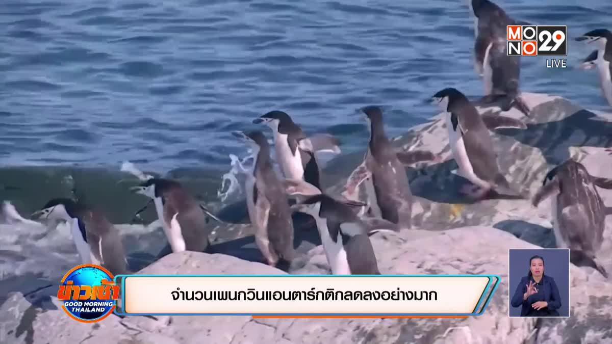 จำนวนเพนกวินแอนตาร์กติกลดลงอย่างมาก