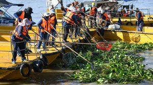 กทม. เร่งจัดการผักตบชวาในแม่น้ำเจ้าพระยา