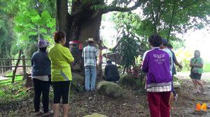 ชาวบ้านแห่ส่องหาเลขเด็ด ขอโชคต้นมะม่วงโบราณอายุ 500 ปี