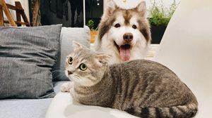 อาหารน้องหมา น้องแมว ตามช่วงวัย ควรให้แบบไหน เรื่องสำคัญถ้ารักพวกเขาต้องรู้