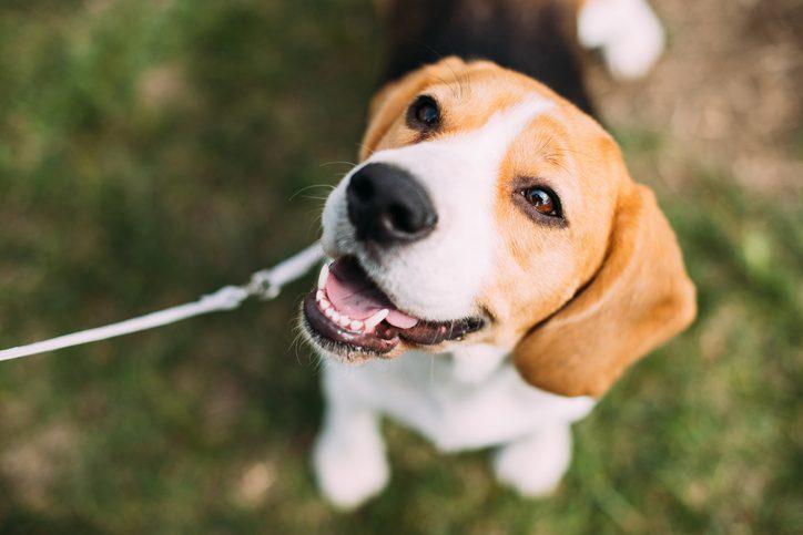 โรคพิษสุนัขบ้า อาการและวิธีป้องกัน ภัยร้ายใกล้ตัว อย่าชะล่าใจ!