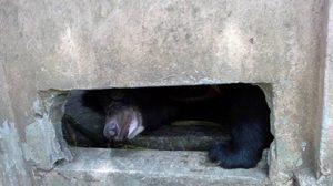 วอนตรวจสอบ หมีวัดดังเหมือนจะไม่สบาย อาจต้องการความช่วยเหลือ