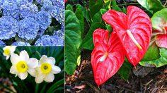 10 อันดับ ดอกไม้สวยแต่อันตราย