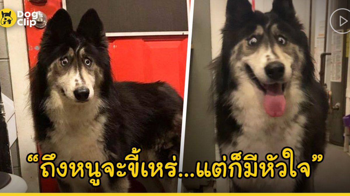 """ไซบีเรียนกลายเป็นน้องหมาไร้บ้านเหตุเพราะหน้าตาที่ดู """"แปลก"""" จนไม่มีใครต้องการ"""