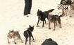 การแข่งขันสุนัขลากเลื่อนในสหรัฐฯ