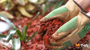 คลุมดิน วิธีช่วยลดวัชพืชและกักเก็บความชื้นในดิน