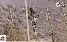 ผู้อพยพชาวแอฟริกันแห่ปีนรั้วเข้าสเปน