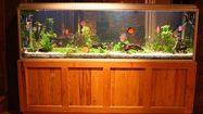 5 ฮวงจุ้ยตู้ปลา ควรตั้งทิศไหน ถึงจะดี  เสริมพลังชี่ ให้บ้าน